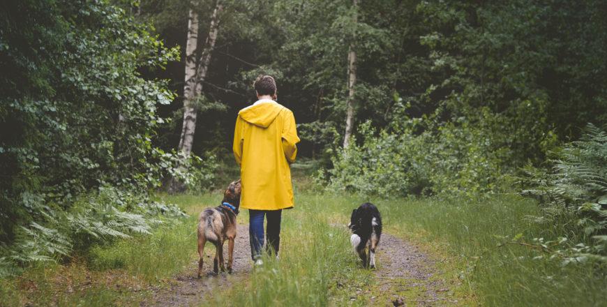 Henkilö kävelee metsässä koirien kanssa