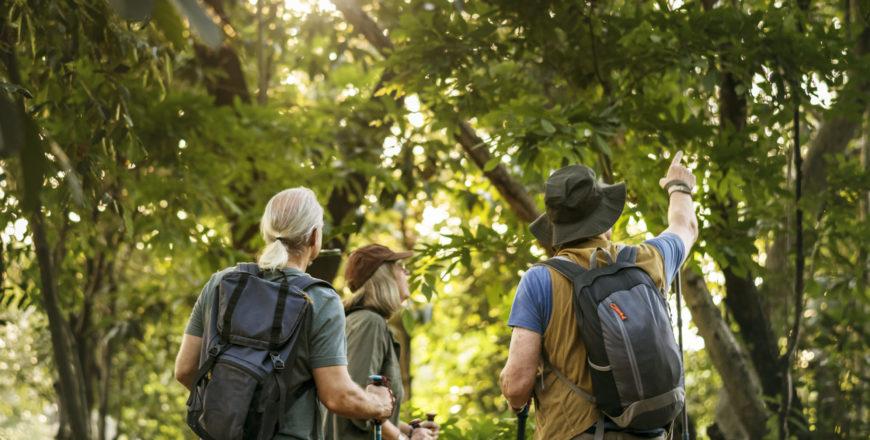 tre människor som vandrar i djungeln