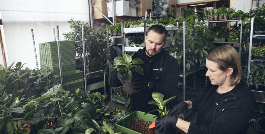 Kaksi henkilöä istuttaa kasveja.